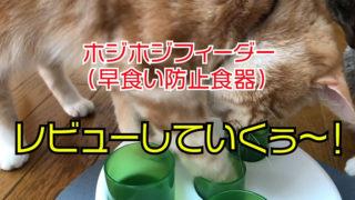 【ホジホジフィーダー】早食いを防止してくれてダイエットにもなる早食い防止食器【catit SENSES2.0】