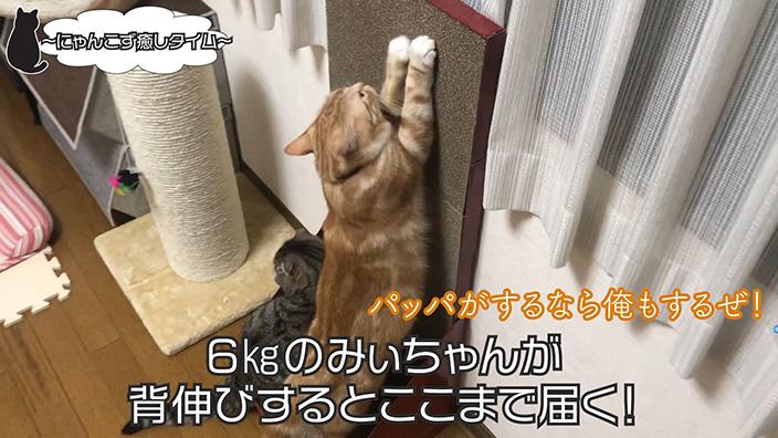 実際の背伸び画像(みぃちゃん)