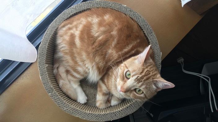 【ミューガリガリサークル-スクラッチャーレビュー】愛猫が丸くなってくつろぐ|インテリアにも適した爪とぎ【口コミ・感想・評価】