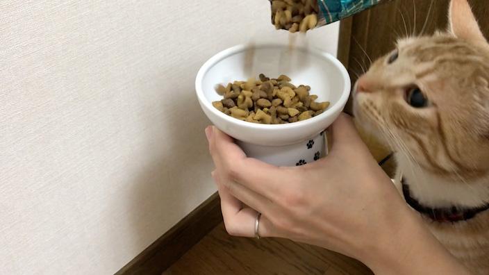 猫用の食器・餌入れ おすすめ人気ランキングまとめ