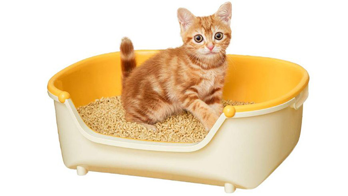 子猫用トイレ