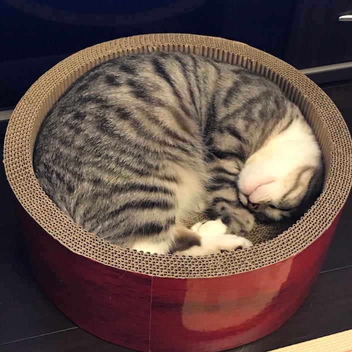 ミュー-ガリガリサークル-スクラッチャー_りっちゃんお昼寝