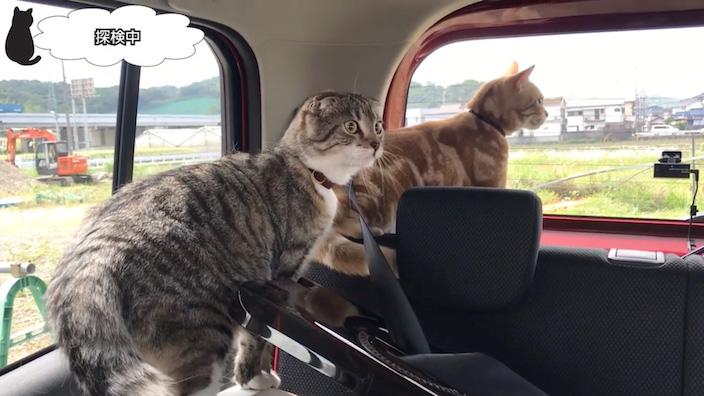 車の中で猫たちを解放_2