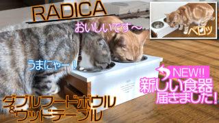 【ラディカ ダブルフードボウル&ウッドテーブル レビュー】高さと傾斜で食べやすく機能性も抜群!スタイリッシュなデザインがかわいい猫用食器【動画あり】