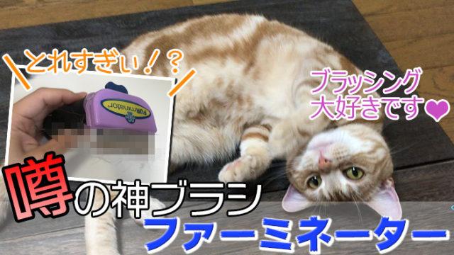 【ファーミネーター_小型猫Sサイズ_レビュー】ハゲないか心配するほど抜群の除毛力を誇るペットブラシ【動画あり】