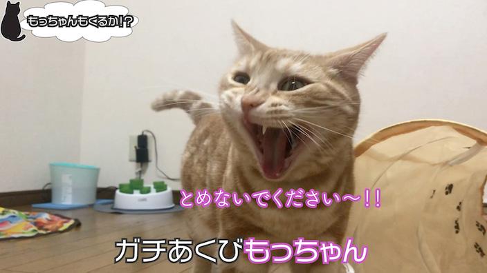 猫壱 キャットトンネルスパイラルのイマイチなところ・デメリット_思ったほど遊んでくれない
