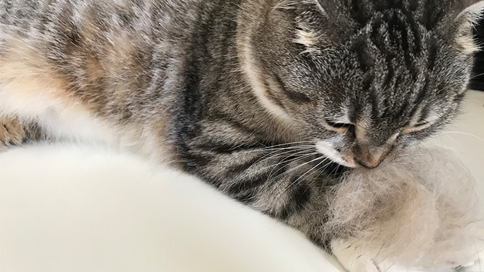 ファーミネーター_小型猫Sサイズのレビューまとめ