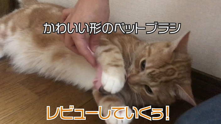【ペットブラシ】付属のお掃除針でお手入れ楽チンな形のかわいいペットブラシ【動画あり】