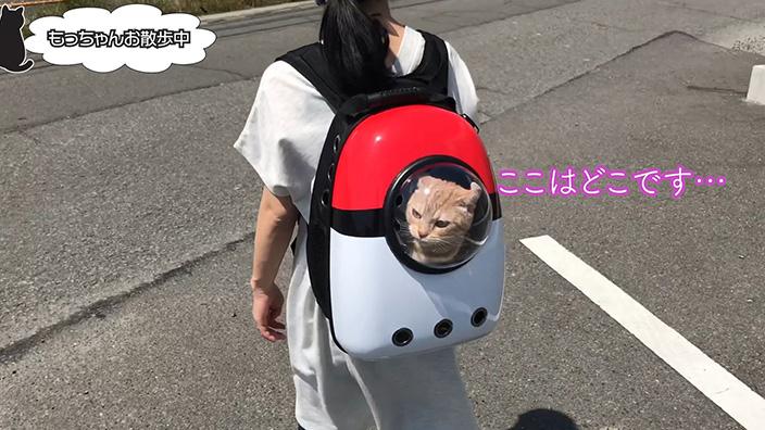 猫用キャリーバッグはどんな時に使うの?