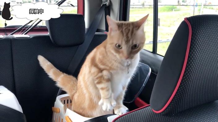 車の中で猫たちを解放_1