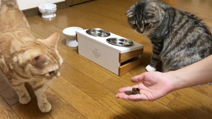 ジャガーキャットフードの口コミ・評判・レビュー_もっちゃんの試食_1