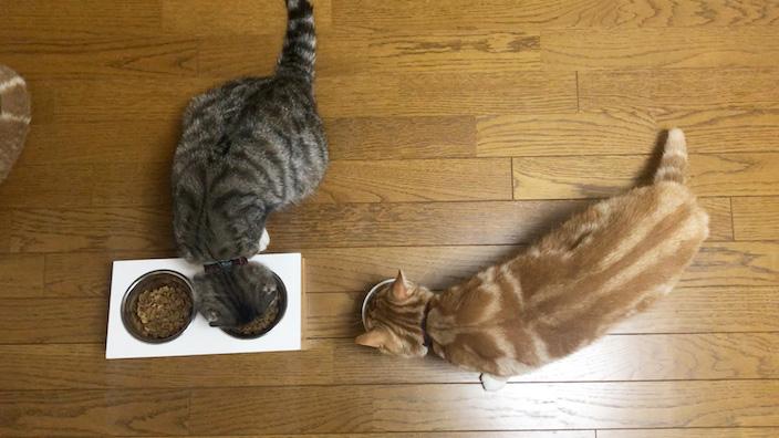 ピュリナワン キャットフードはこんな猫ちゃんにオススメ!