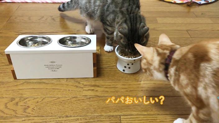レガリエキャットフードの口コミ・評判_レガリエキャットフードはこんな猫ちゃんにオススメ!