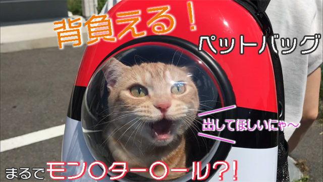 【Eternal Wings ペットバッグ レビュー】モンスターボール風でかわいい!持ち運びが楽なリュックタイプの犬猫兼用キャリーバッグ【動画あり】