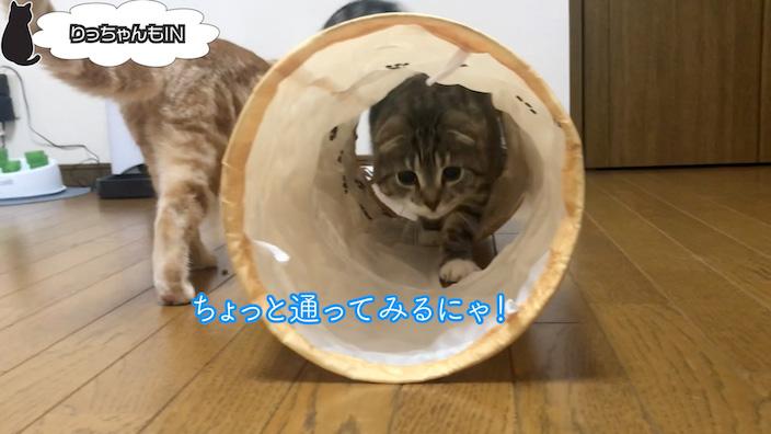 猫壱 キャットトンネルスパイラルのおすすめポイント・メリット_猫が遊んでくれた