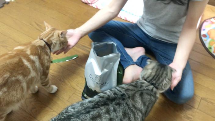 カナガンキャットフードはこんな猫ちゃんにオススメ!