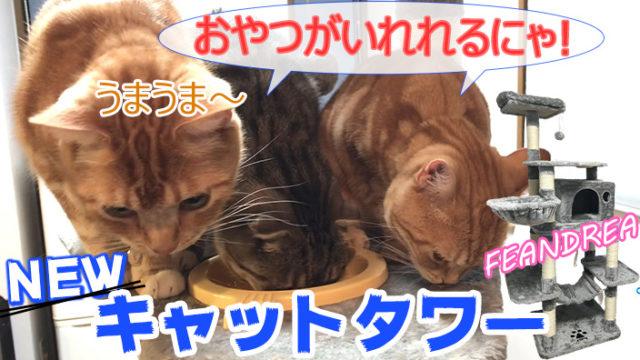 【FEANDREA_キャットタワー】174cmと大きくて猫をひきつけるギミックがたくさんあるキャットタワー【動画あり】