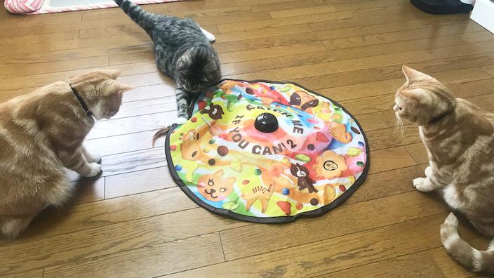 【猫壱 キャッチミーイフユーキャン2 レビュー】勝手に猫をじゃらしてくれるすごいやつ!【動画あり】