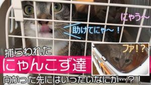 【和歌山インター動物病院の口コミ・レビュー】3匹の愛猫をワクチン摂取に連れて行きました【りっちゃん激おこ!】