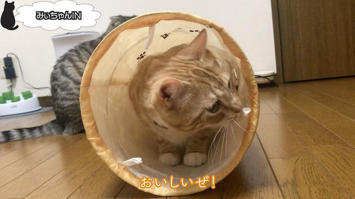 猫壱 キャットトンネルスパイラルのレビューまとめ