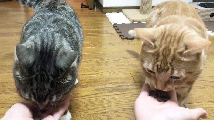 ジャガーキャットフードの口コミ・評判_ジャガーキャットフードはこんな猫ちゃんにオススメ!