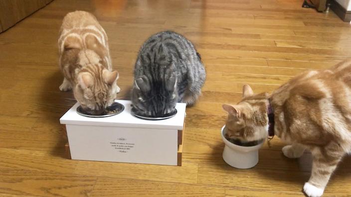 ピュリナワンキャットフードの口コミ・評判_猫の食いつきはどう?|ピュリナワン キャットフードの商品レビュー_全員で食べる