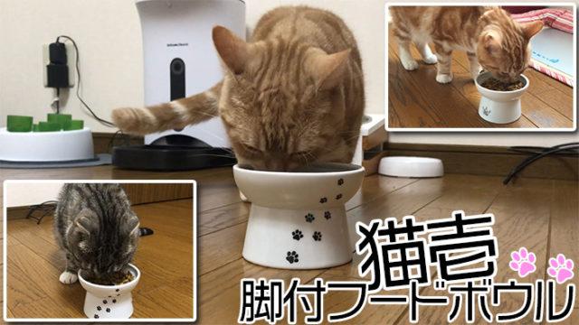 【猫壱 脚付フードボウル レビュー】コスパ最高峰!十分な高さがありデザインもかわいい猫用食器【動画あり】