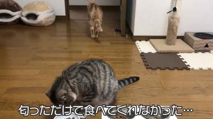 ねこはぐキャットフードの口コミ・評価_みぃちゃん試食2