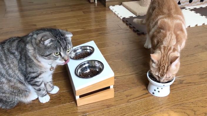 グランツキャットフードはこんな猫ちゃんにオススメ!