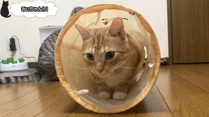 猫壱 キャットトンネルスパイラルのおすすめポイントやイマイチなところ
