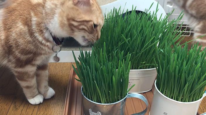 猫草おすすめ10選_猫草をあげるなら注意することは?