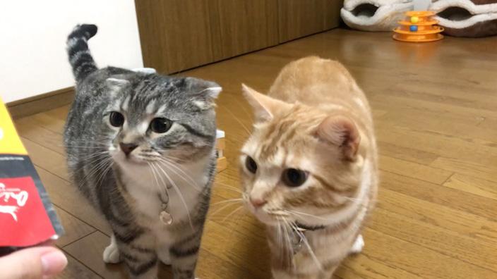 オリジンキャットフードに興味津々な猫たち