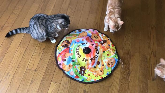 猫のおもちゃおすすめ13選_猫のおもちゃの必要性