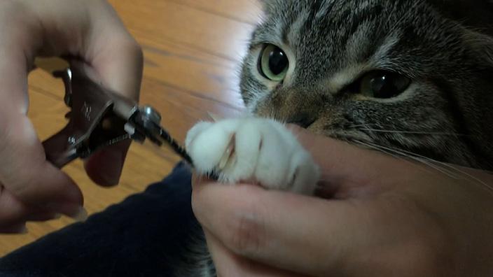 廣田工具製作所 爪切り_ピコックタイプのおすすめポイントやイマイチなところ