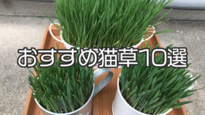 【愛猫家イチオシ】猫草おすすめ10選|猫草の種類や選び方を詳しく解説!