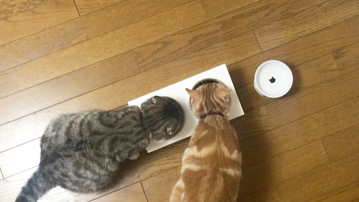 ニュートロはこんな猫ちゃんにオススメ!