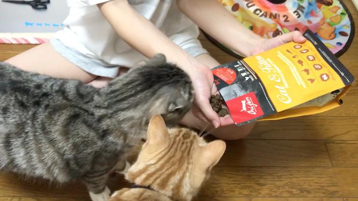 オリジンキャットフードはこんな猫ちゃんにオススメ!