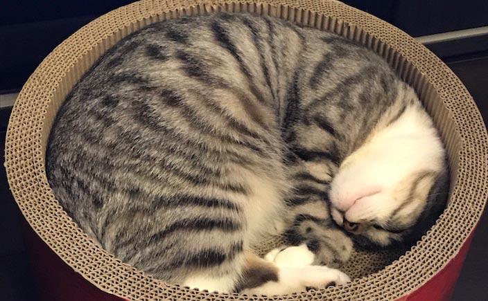 おすすめの猫用爪とぎ10選|人気の商品を厳選!