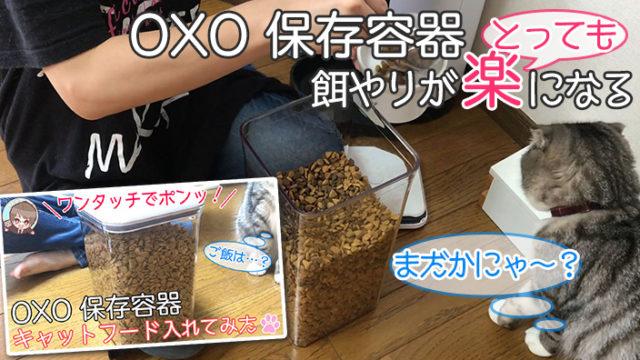 【OXO 保存容器レビュー】キャットフードの酸化が防げる密閉可能な保存容器【動画あり】