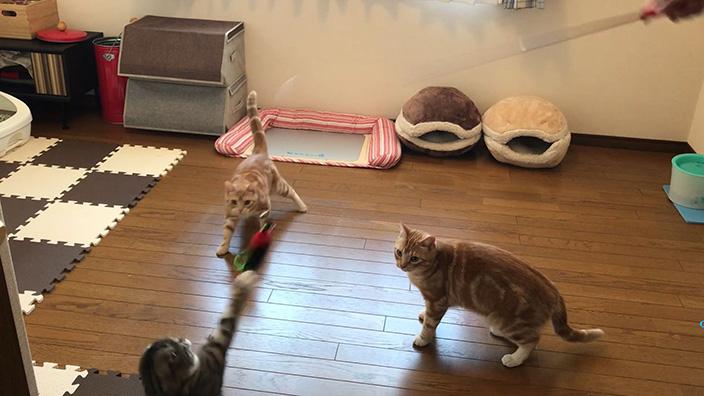 猫のおもちゃおすすめ13選_まとめ