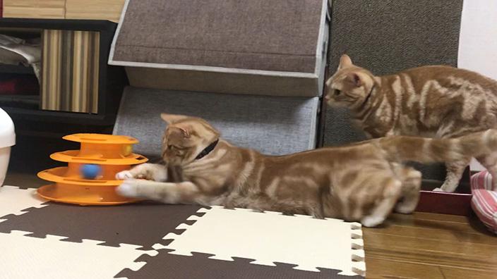猫のおもちゃおすすめ13選_猫のおもちゃの選び方