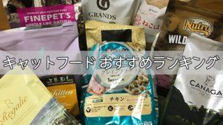 【愛猫家イチオシ】キャットフードおすすめランキング|安全で食いつき抜群な餌はどれ?【2019年】