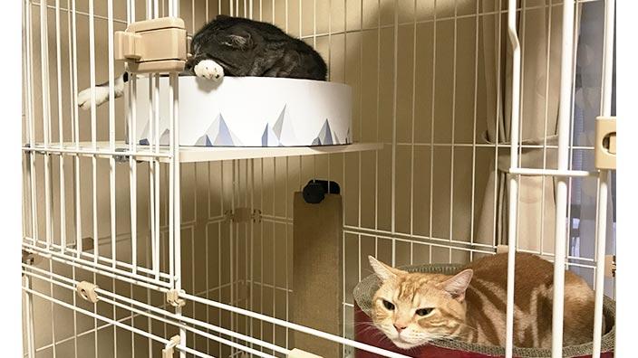おすすめ猫用ケージ_猫用ケージの選び方