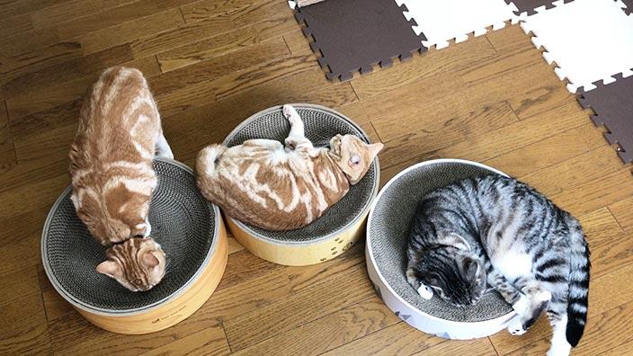 ミュー (mju) ガリガリディッシュスクラッチャー_pidanと猫壱と比較してみた