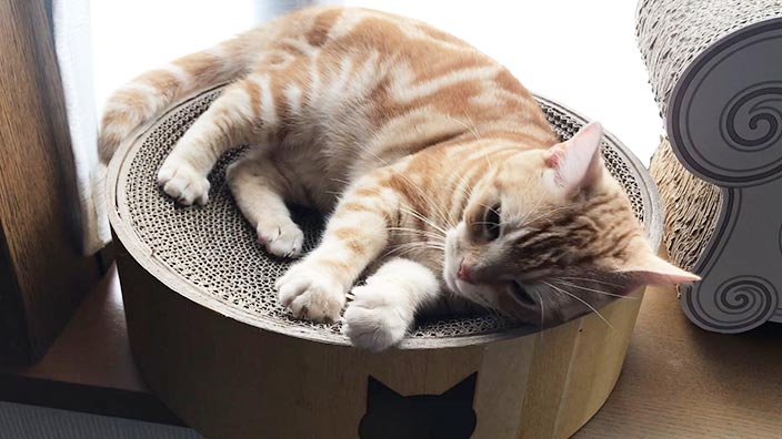 猫壱バリバリボウル_くつろぎスペースとして活用できる