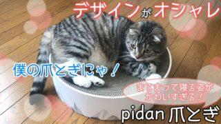 【pidan スクラッチャー 猫ベッド レビュー】オシャレなデザインでくつろぎスペースにも使える猫の爪とぎ【動画あり】