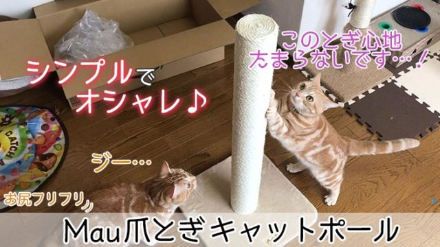 【Mau 爪とぎ キャットポール レビュー】オシャレで高品質な麻縄タイプの猫の爪とぎ【動画あり】