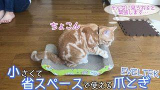 【EVELTEK 爪とぎ レビュー】省スペースで使えてコスパがいい猫の爪とぎ【動画あり】