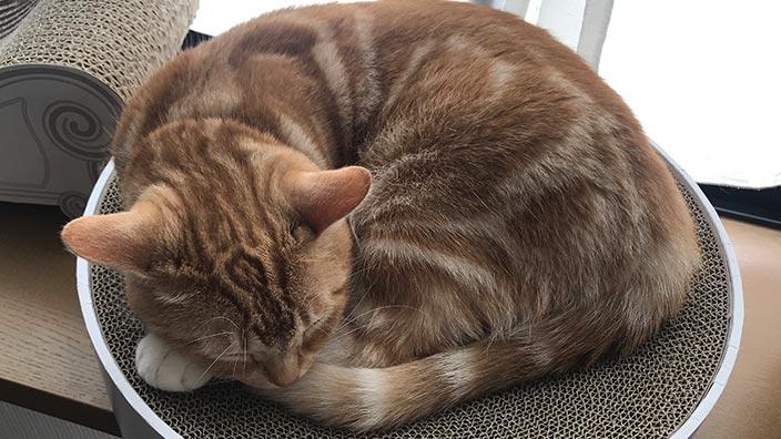 pidan_スクラッチャー 猫ベッドのおすすめポイントやイマイチなところ