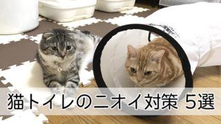【猫トイレの臭いが気になる人へ】解決!猫トイレの臭い対策5選